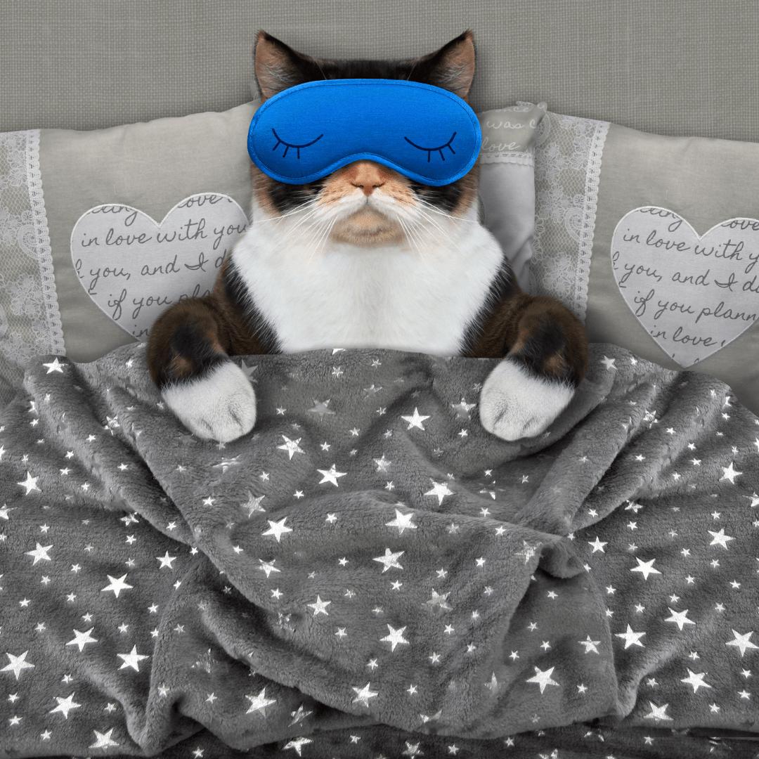 早上賴床的貓