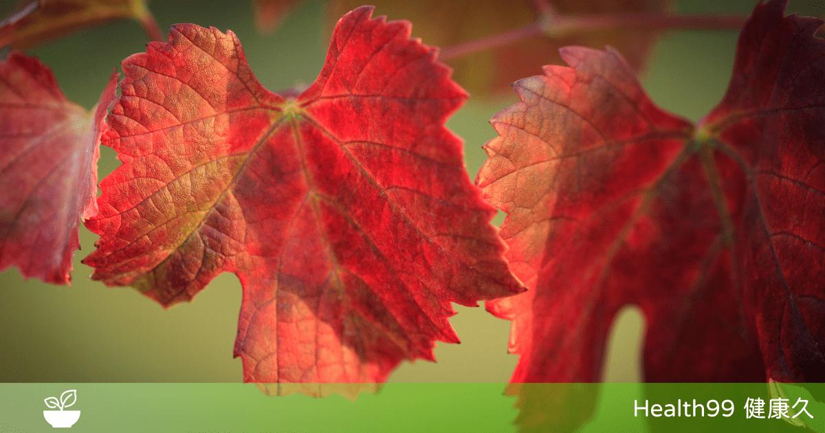 【成份功效】紅葡萄葉是什麼?紅葡萄葉的神奇功效與價值,你知道嗎?